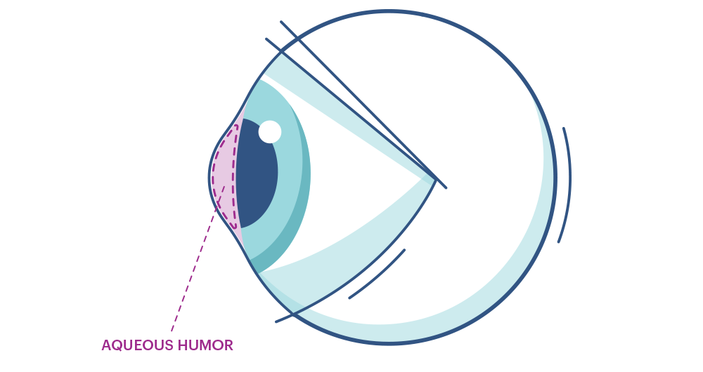 Illustration of any eye highlighting aqueous humour